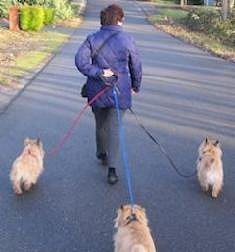 Mar_Walking_3_dogs_behind_handler