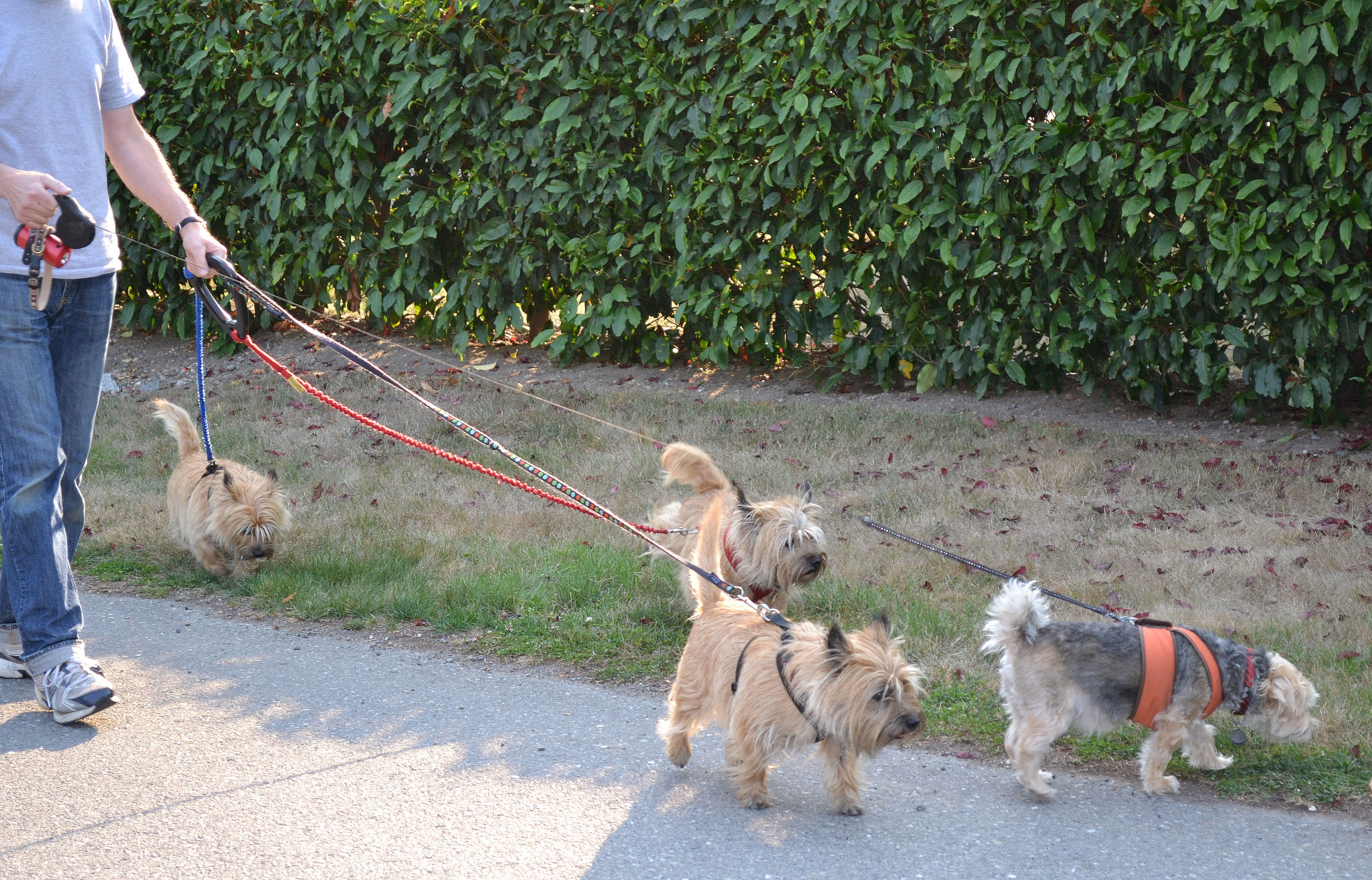 ZZ_Walking_4_doggies_with_UTurn_handle_-_Copy