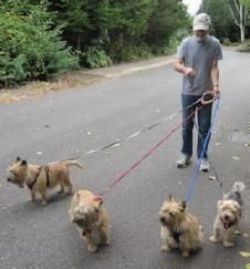 ZZ_Walking_4_dogs_untangle_4_leashes_PP