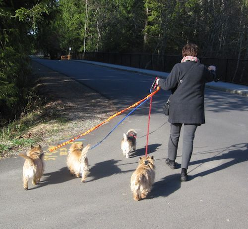 Z_Walking_4_dogs_at_once_2