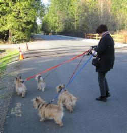 Z_Walking_4_dogs_on_4_leashes_mar1
