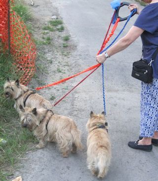 Mar_Reducing-3-Leashes-for-Safety-320