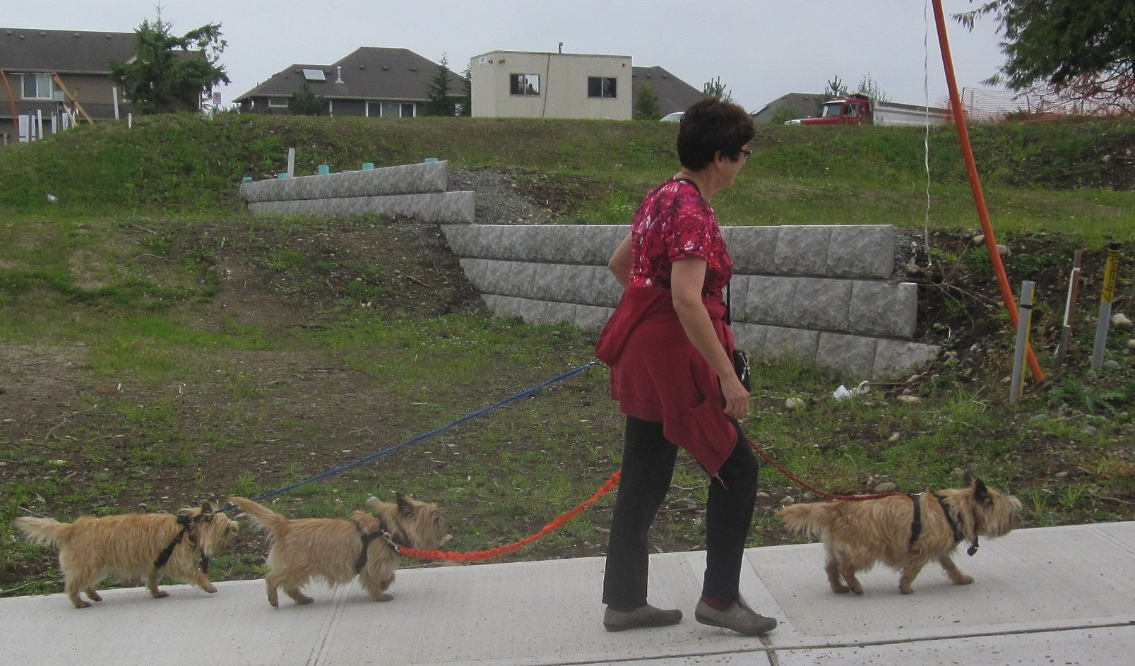 Mar_Walking_3_dogs_with_lots_of_space