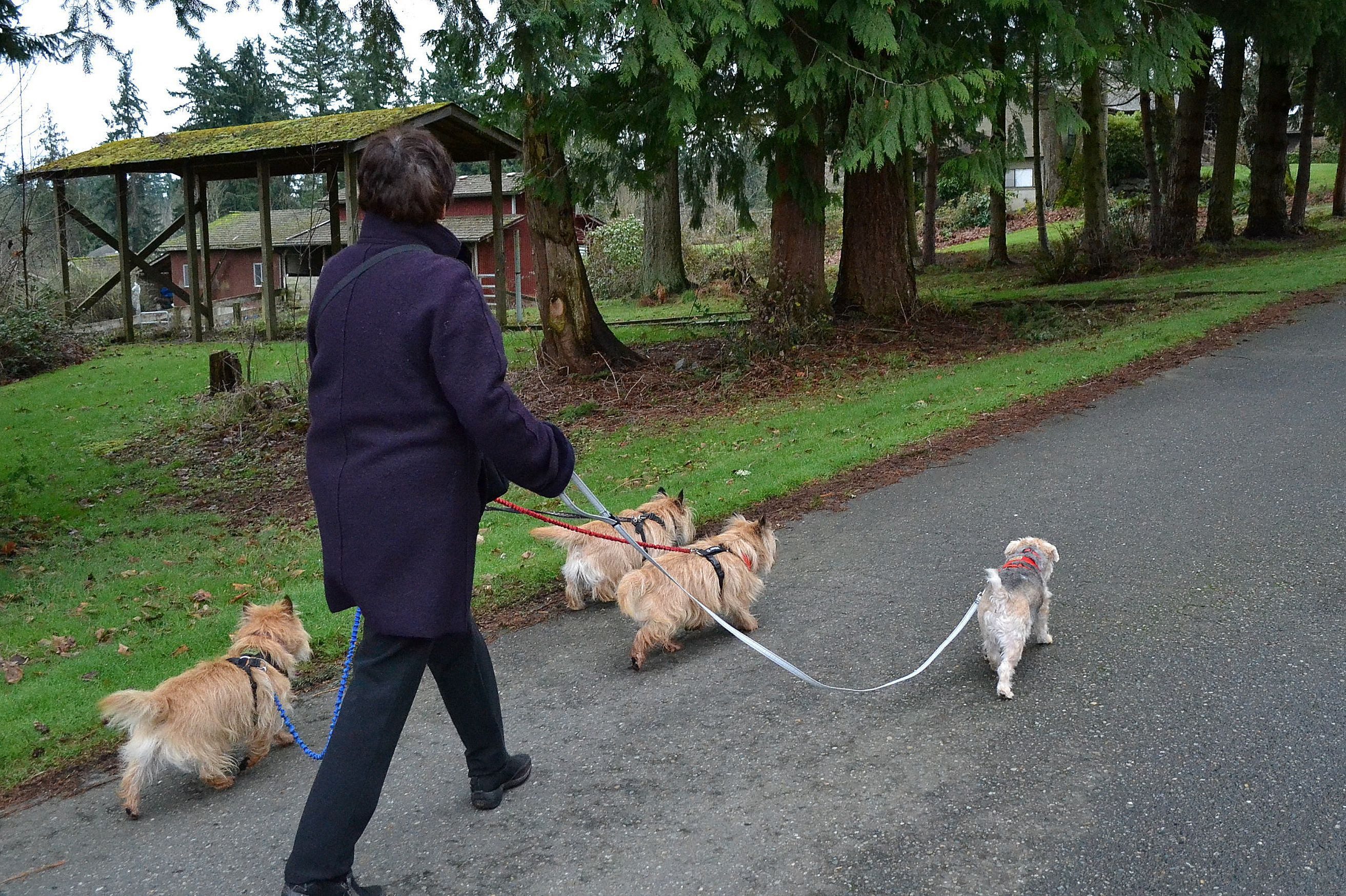 Z_Walking_4_dogs_at_once